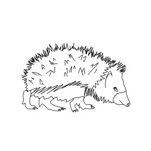 Fauna Pyreneeën | Pyrénées Passions - Gîtes de Charmes