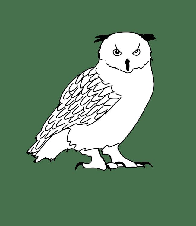 Vogelen Pyreneeën | Pyrénées Passions - Gîtes de Charmes